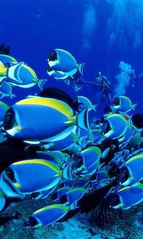 主题 动态海底世界壁纸