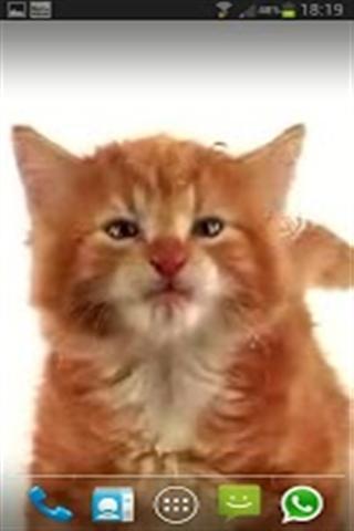 貓舔動態壁紙