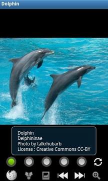 有趣的海豚 Funny Dolphins