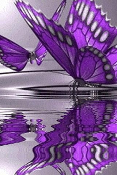 Very Beatiful Butterfly Live W