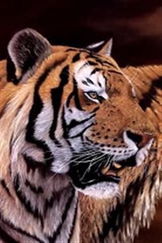 老虎动态壁纸(高清版)