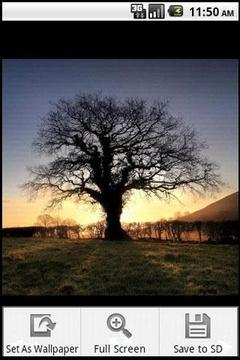 秋天的树木摄影