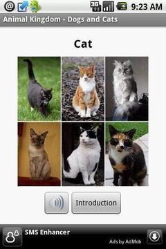 动物王国-狗和猫