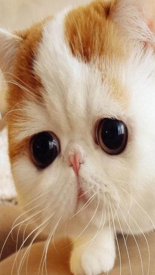 壁纸 365棋牌娱乐城_365棋牌唯一官网活动_365棋牌电脑下载手机版下载 猫 猫咪 小猫 桌面 540_960 竖版 竖屏 手机