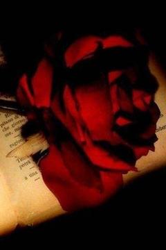 玫瑰的爱情
