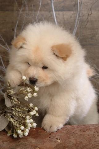 可爱动物壁纸下载|可爱动物壁纸手机版_最新可爱动物