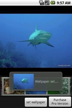 Under the Sea Free