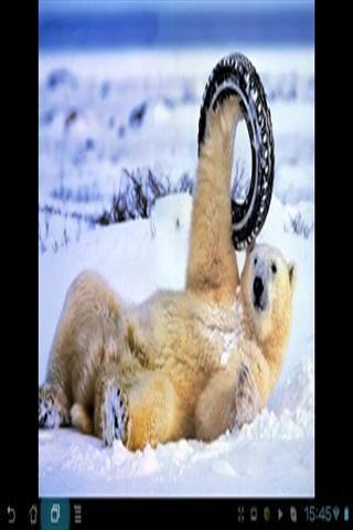 冬季动物壁纸截图(2)
