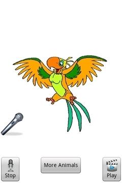 演讲者金鹦鹉