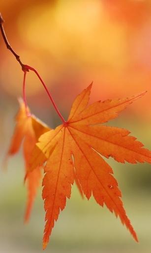 秋天的落叶-桌面壁纸