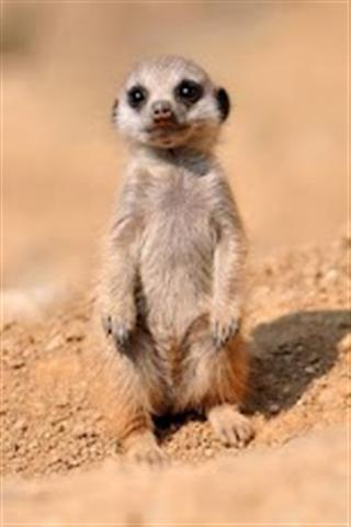 可爱的动物图片截图(5)