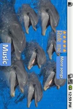 海豚 - 放松的声音
