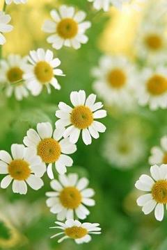 Flora Beauty Wallpaper
