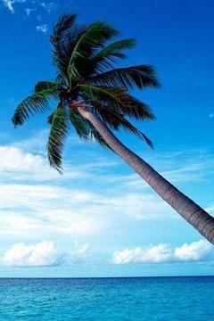 马尔代夫海滩