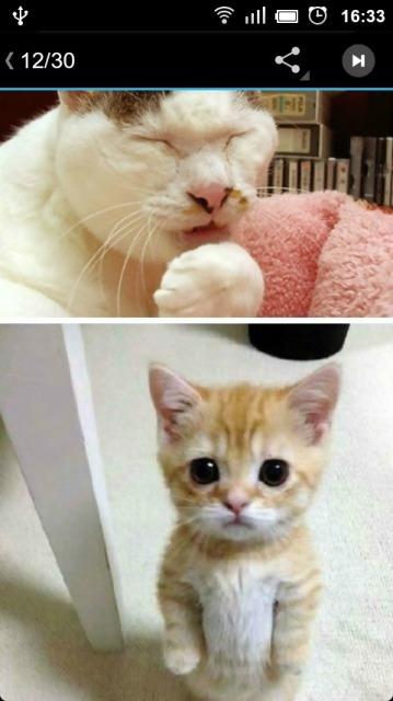 03mb  收集了各种宠物卖萌的照片和动画.搞笑,可爱,搞怪应有尽有.