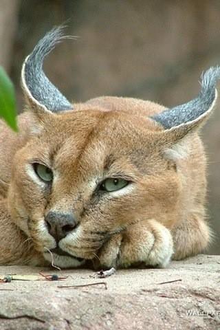 动物壁纸下载|动物壁纸手机版_最新动物壁纸安卓版下载