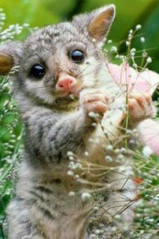 可爱小动物壁纸下载|可爱小动物壁纸手机版_最新可爱