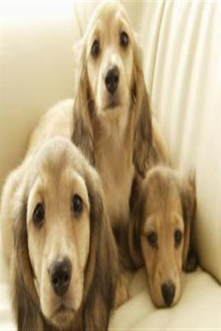 可爱小狗狗壁纸下载_可爱小狗狗壁纸手机版_最新可爱