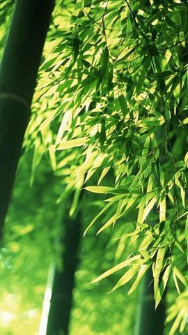 竹林风景壁纸下载