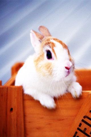 65mb 一个可爱的动物墙纸应用,各种超级可爱的小动物,喜欢的你快来