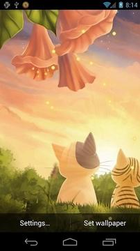 小猫日落墙纸免费