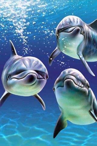 3d海豚和大海下载