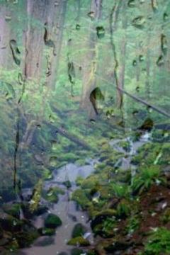 热带雨林的声音