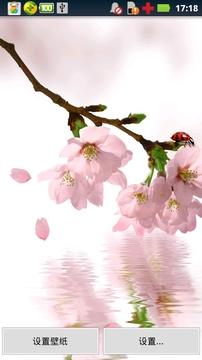 春天桃花动态壁纸