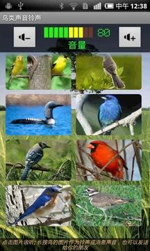 鸟类声音铃声