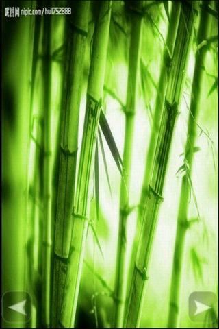 壁纸 风景 植物 桌面 320_480 竖版 竖屏 手机