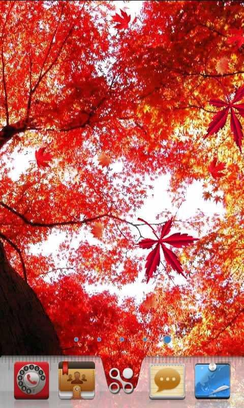 血红枫叶动态壁纸