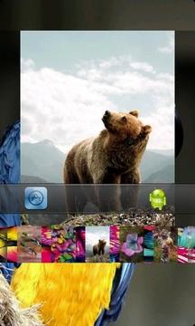 野生动物和自然的图片