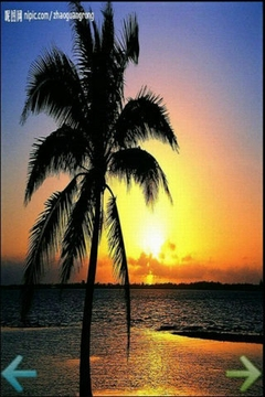 椰树摄影图
