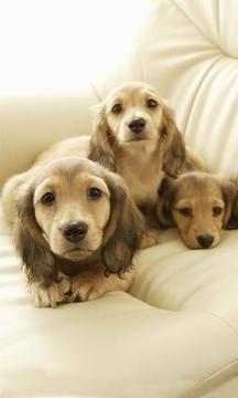 可爱小狗狗