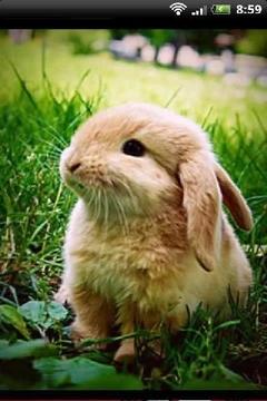 宠物兔兔萌照影集