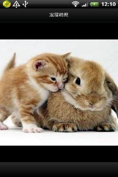 宠猫萌照集