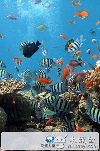 高清海底世界壁纸简介      神奇的海底之城,另一个美丽的世界