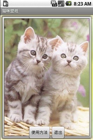 可爱猫咪壁纸下载_可爱猫咪壁纸手机版_最新可爱猫咪