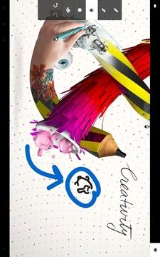 Adobe Debut