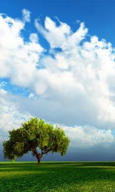 美丽风景动态壁纸_安卓美丽风景动态壁纸免费下载-pp