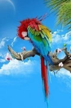 Nice Birds Wallpaper HD