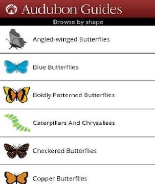 南北美蝴蝶图鉴