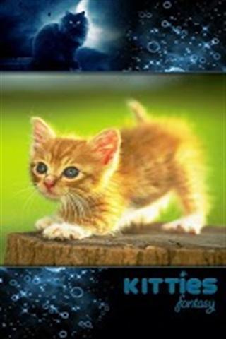 小猫咪手机壁纸截图(4)