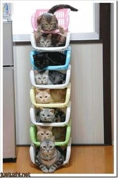 Cute Cat Kittens