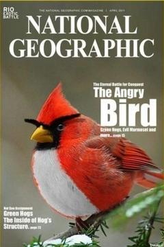 Bird Breeds Gallery