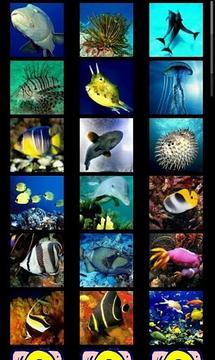 海底总动员拼图