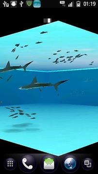 锤头鲨鱼和沙丁鱼