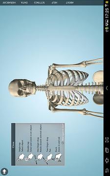 Anatomy 3D - Anatronica