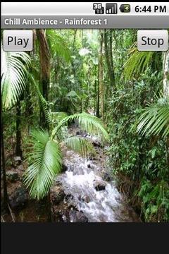 轻松的气氛 - 雨林