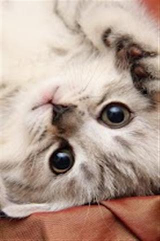 猫生活主题壁纸下载|猫生活主题壁纸手机版_最新猫版